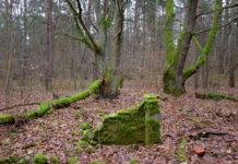 PREGEL.INFO Восточная Пруссия
