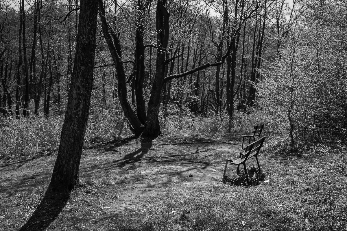 Камень Лжи и камень Правды © Александр Пожидаев для PREGEL.INFO