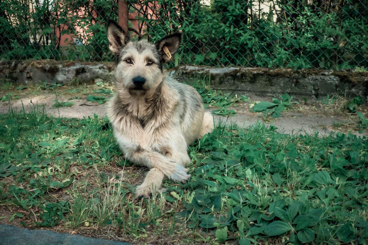 В мире животных Калининграда. Фото © Александр Пожидаев для PREGEL.INFO