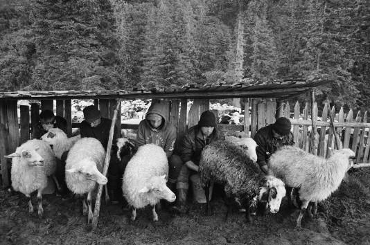 Вiвчарi - гуцульские пастухи Европы. Фото Андрей Ли для PREGEL.INFO