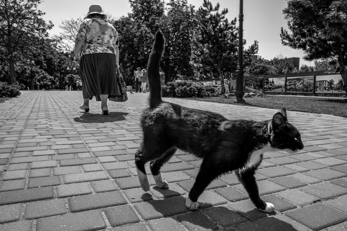 Променад, Зеленоградск, Калининградская область ©Александр Пожидаев для PREGEL.INFO