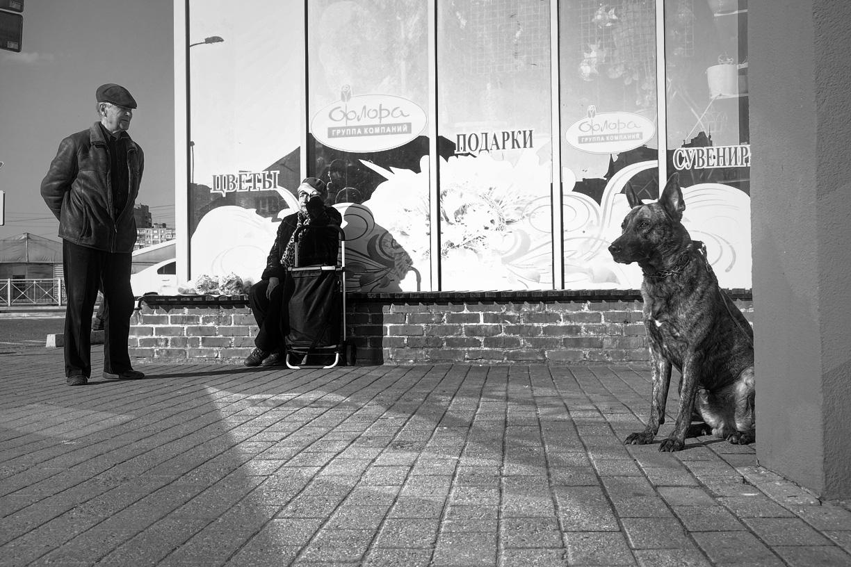 Улица Солнечный бульвар, Калининград © Александр Пожидаев для PREGEL.INFO