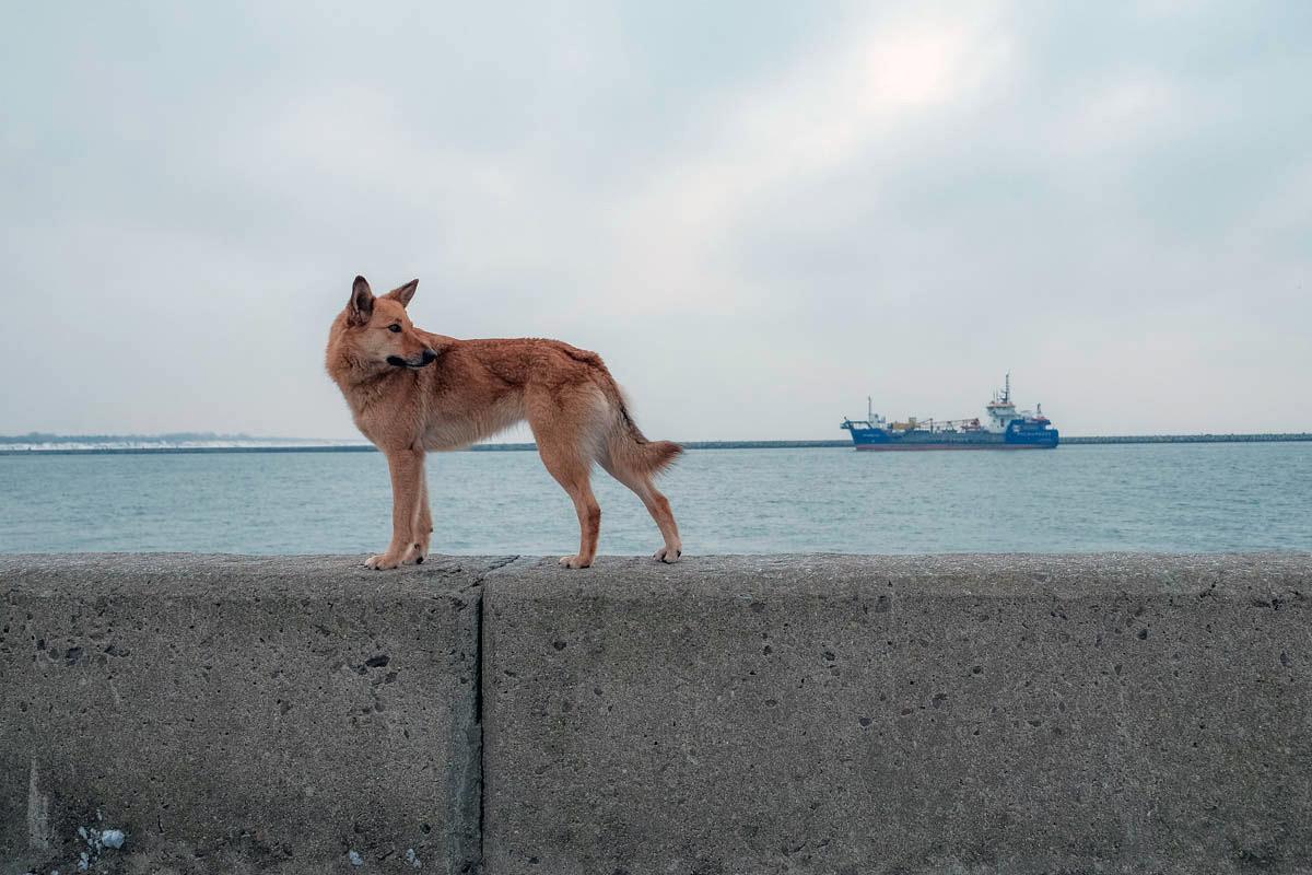 Морской бульвар, Балтийск © Александр Пожидаев для PREGEL.INFO