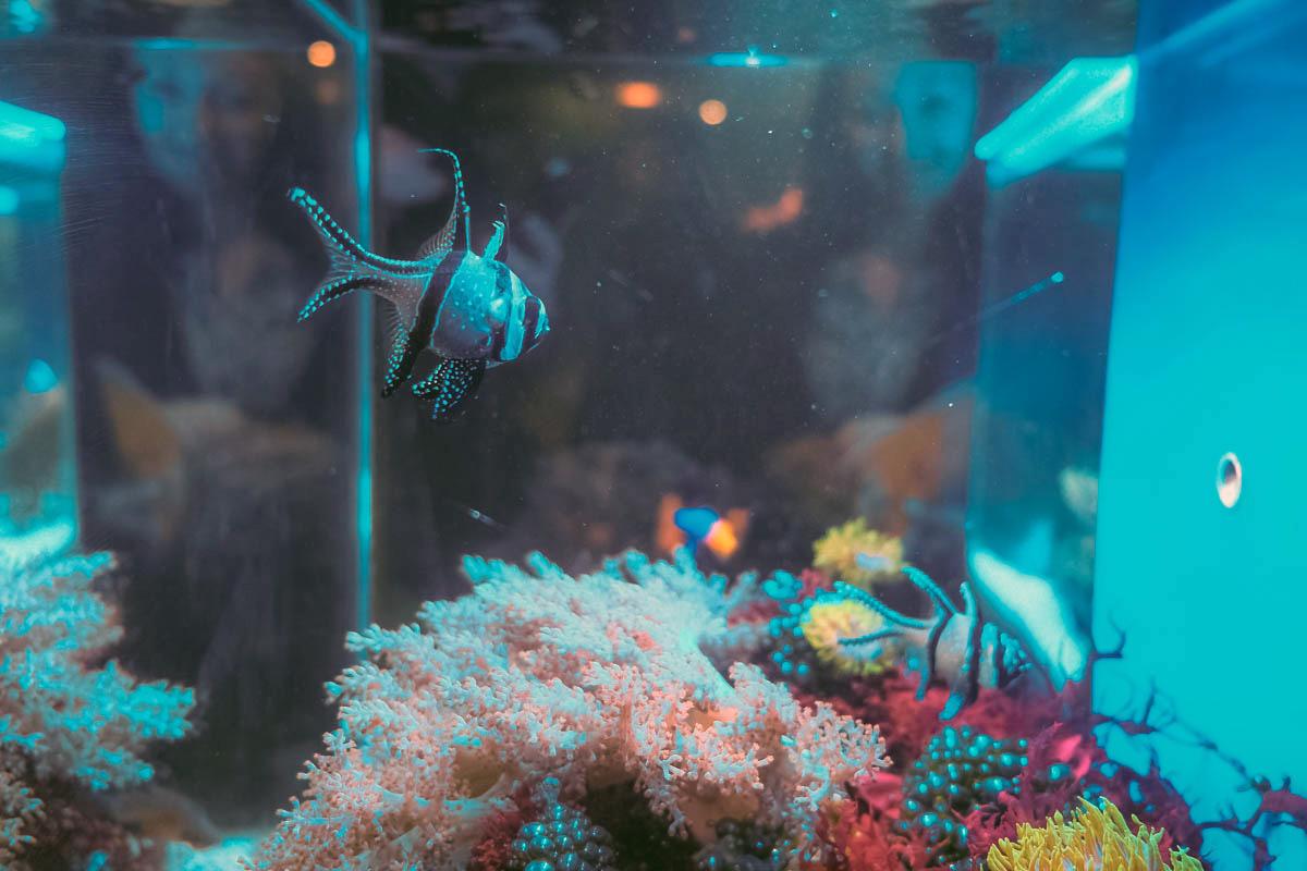Музей мирового океана © Александр Пожидаев для PREGEL.INFO