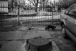 Проспект Мира, Калининград © Александр Пожидаев @ Калининград | Калининградская область | Россия